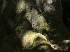Shadow play ... (martina.stang) Tags: shadow abstract tree face animal nose foot eyes mysterious shadowplay beech buche schattenspiel buchenstamm