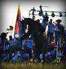 Dionel Oviedo y El Torito (Eduardo Amorim) Tags: horses horse southamerica argentina criollo caballo cheval caballos cavalos corrientes pferde herd cavalli cavallo cavalo gauchos pferd chevaux gaucho 馬 américadosul gaúcho amériquedusud лошадь gaúchos 马 sudamérica suramérica américadelsur südamerika crioulo caballoscriollos criollos jineteada حصان tropillas americadelsud gineteada tropilhas tropilla crioulos cavalocrioulo americameridionale tropilha caballocriollo eduardoamorim cavaloscrioulos curuzúcuatiá provinciadecorrientes corrientesprovince cavall馬