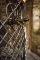 Stickin' Your Neck Out (george.bremer) Tags: autumn film water fountain neck austria nikon dragon mesh head screen slidefilm scan epson f3 e6 kitzbhel v750 wittnerchrome