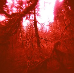 Mirkwood (liquidnight) Tags: statepark pink trees light red sunlight colour film analog forest mediumformat landscape moss holga lomo xpro lomography crossprocessed fuji hiking vibrant branches magenta fuchsia surreal eerie creepy vegetation dreamy tungsten analogue silverfallsstatepark expired vignetting fujichrome redshift jrrtolkien dense 120n mirkwood t64 taurnufuin