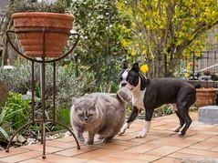Cat + Dog 10.04.2012