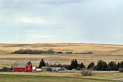 Farm Near Warner, Alberta