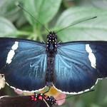 """BIO 245: Ecology of Ecuador<a href=""""http://farm8.static.flickr.com/7140/6996068074_704876d284_o.jpg"""" title=""""High res"""">∝</a>"""