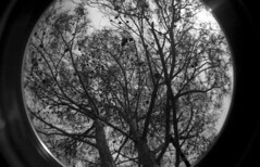 Untitled {In Explore} (Irene Stylianou) Tags: trees blackandwhite bw tree film nature analog 35mm lomo lomography europe seasons toycamera cyprus wideangle fisheye explore filmcamera ilford ilforddelta400 analogphotography 400asa 400iso fisheyelens lomocamera delta400 wideanglelens filmphotography lomographic fisheye2 blackandwhitefilm ilforddelta ilfordfilm ilforddelta400professional fisheyeno2 fisheyeii delta400professional kornos filmdatabase lomographyfisheyeno2 larnacadistrict cyprusnature irenestylianou cyprusweather cyprusenvironment