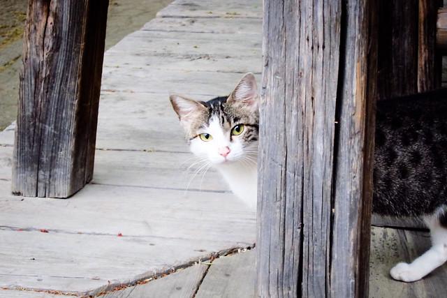 Today's Cat@2012-05-02