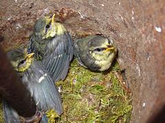 Thse-la-Romaine (Loir-et-Cher). (sybarite48) Tags: france bird pssaro oiseau vogel pjaro uccello  ku ptak loiretcher    thselaromaine