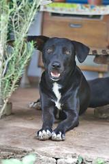 Adolfo necesita un hogar! (tatadbb) Tags: dog perro mascota 059