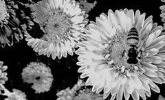 Seeking Life (ERIC OEBANDA) Tags: bw oebanda ih aasia icapture flickrsfinestimages1