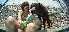 (newites) Tags: dog pet girl animal lab labrador chica chocolate fisheye perro sick choco mascota gopro newites
