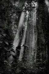 ...in quel residuo di pioggia ... (UBU ♛) Tags: blancoynegro blackwhite noiretblanc blues biancoenero bluacqua ©ubu blutristezza unamusicaintesta landscapeinblues luciombreepiccolicristalli bluraggio