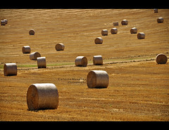 Il colore del grano #9 (Celeste Messina) Tags: light summer italy art nature field yellow gold photo florence nikon italia colours estate view artistic wheat country perspective shapes july natura campagna giallo filter tuscany ear campo firenze bales toscana colori luce forme oro celeste grano prospettiva luglio filtro contrasto spiga rotoballe polarizzatore d5000