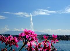 """~~ Genve """"Jet deau"""" - durch die Blume ~~ (relibu) Tags: schweiz suisse genve genf fontne genfersee wasserfontne gatageskarte"""