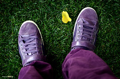 Walking on my Shoes (Mohammad Reza Rostami) Tags: purple yellowleaf greenpurple  walkingonmyshoes  mohammadrezarostami mrrir rostaminet everytingspurple