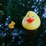 Book Festival ducks