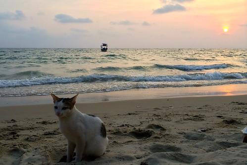 Sihanoukville sea cat