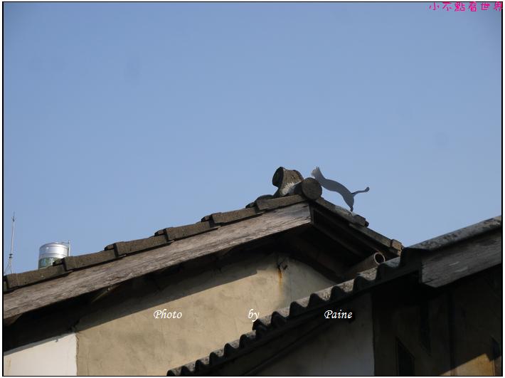 雲林虎尾屋頂上的貓 (3).JPG