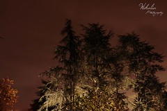 Feeling Nature's Glow (Wikalia) Tags: road trees nature landscape lyon pierre vert muse bleu route ciel land pont été explorers paysage arbre printemps vélo abeille insecte flore rouille faune guêpe natuer feuillage forestimages lentilly