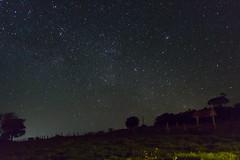 looking to the stars (Andre Zuin) Tags: world trees night stars cool space estrelas galaxy nebula noite flashlight astronomy cerrado arvores universe ceu infinite 30s espao galaxias carinae southpleiades
