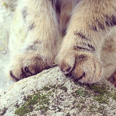 (Freja Birgersdotter) Tags: feet nature animal stone cat fur mammal foot paw katten sweden stripes north stripe sverige morris paws sten svensk katt sitter fot mossa iphone djur randig tass sitta animalpic ftter pls bondkatt kattdjur dggdjur tassar iphone5 sprcklig