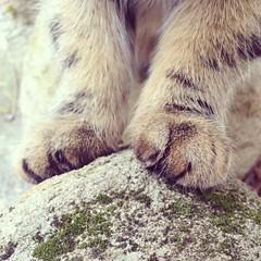 (Freja Birgersdotter) Tags: feet nature animal stone cat fur mammal foot paw katten sweden stripes north stripe sverige morris paws sten svensk katt sitter fot mossa iphone djur randig tass sitta animalpic fötter päls bondkatt kattdjur däggdjur tassar iphone5 spräcklig