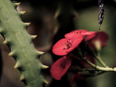 "Cactus • <a style=""font-size:0.8em;"" href=""http://www.flickr.com/photos/44919156@N00/13537023163/"" target=""_blank"">View on Flickr</a>"