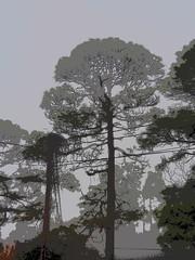 P3220256 (photos-by-sherm) Tags: trees fog pine nc spring foggy neighborhood valley wilmington