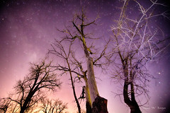 Night to Day (Striking Photography by Bo Insogna) Tags: morning trees winter sky nature beautiful night canon stars landscape star early colorado colorful seasons purple astrophotography hdr 6d jamesinsogna