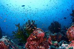 SEN_0248 (huisen) Tags: nikon scuba fisheye tokina weh isotta 1017mm d7100 ysd1 isotecnic