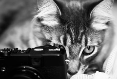 My Little Photographer (Kenny Dong) Tags: camera blackandwhite bw pet cats pets cat canon blackwhite eyes kitten photographer kittens siberian fujifulm siberianmix