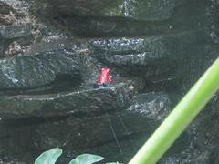 "Santa Elena: les étangs à grenouilles <a style=""margin-left:10px; font-size:0.8em;"" href=""http://www.flickr.com/photos/127723101@N04/26390643794/"" target=""_blank"">@flickr</a>"
