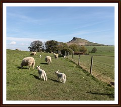 HFF.........twins. (stu.bloggs..Dont do Sundays) Tags: trees fence landscape spring sheep farm may farmland lambs northyorkshire fenceline hff roseberrytopping happyfencefriday