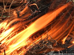 DSCN2491 (moisesbarcellos) Tags: life book power dancing flames books burn firedancing ember fier