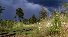 A storm is coming closer ... (Peter u Hilde) Tags: sturm unwetter tisterbauernmoor aprilwetterimmai