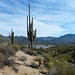 Tall saguaro along the hiking trail