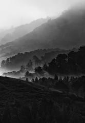 Wildcat Morning (BlackRockBacon) Tags: morning blackandwhite fog pentax hills bayarea tilden layered wildcatcanyon tamron70300 pentaxk5