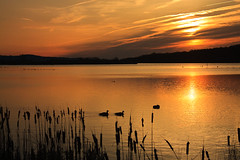 Middle Creek Sunup (MurrayH77) Tags: nature creek geese wildlife pa middle wma greatphotographers masterclasselite