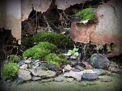 retired coal bunker (Helen Marie Brown) Tags: moss rust decay spiderweb bunker finepix fujifilm coal dereliction assignment4 practicalphotography hs10 helenmariebrown