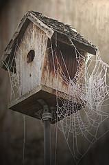Spiderman's Lair (Team Hymas) Tags: house bird spider web shirleen teamhymas hymasimages