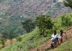 African Cliff Farming (cowyeow) Tags: poverty africa cliff mountain town village view farm african farming poor cliffs valley vista environment crops uganda rugged steep kilembe kilembevalley