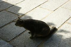 (ddsnet) Tags: cats japan cat sony  nippon neko  nihon 900   kyushu      sagaken     900 karatsushi        900
