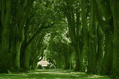 A dose of green (Deb Jones1) Tags: park trees green nature monochrome beauty canon botanical outdoors 1 jones flora explore deb flickrduel