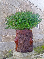 (Luis Diaz Devesa) Tags: espaa verde green planta nokia spain europa europe galicia galiza pontevedra riasbaixas maceta cambados castrelo ofacho mygearandme mygearandmepremium luisdiazdevesa