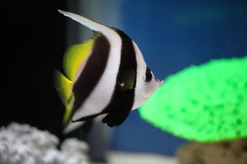 かわいい魚