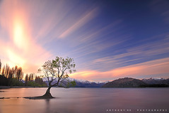 Lasers War (anthonyko) Tags: longexposure sunset newzealand tree water southisland shag lakewanaka 110nd