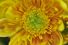 Beauty of The Nature (asifsherazi) Tags: pakistan flower nature beautiful beauty lahore nikond700 asifsherazi