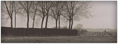 Follow the hedge (Esther Crauwels) Tags: autumn trees blackandwhite panorama fall netherlands grey bomen december zwartwit sony herfst nederland boom hedge picnik heg zuidlimburg
