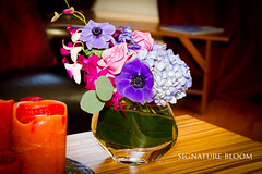 Los Gatos Wedding Ideas, Purple and Blue Arrangement (Signature Bloom) Tags: flower wedding florist sanjoseca sanjose 95121 signaturebloom wwwsignaturebloomcom centerpieces arrangements design designer bridal designs floral decor decorations events vendor ideas pictures images flowers weddings florists southbay peninsula siliconvalley purple blue arrangement anemone hydrangea rose delphinium dendrobiumorchid silverdollareucalyptus centerpiece cocktailarrangement losgatosca weddingflowers reception for flowersforwedding weddingideas losgatosweddingflowers weddingflowerslosgatosca losgatosflorist losgatosweddingflorist 95032 bluewedding purplewedding