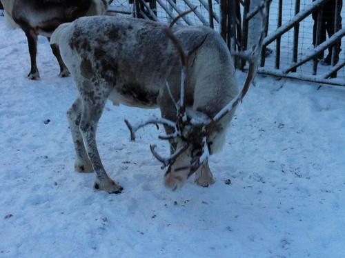111208_Lappland_289