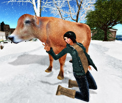 The Cow was looking at me... (Anjelyc Morales) Tags: h secondlife glitterati 6t magika grixdale savoirfaireshapes deetalez hideandseeksim alvulo