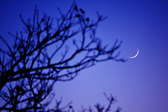 fresh moon (Pixeled79) Tags: blue moon tree evening nikon crescent trunks d300